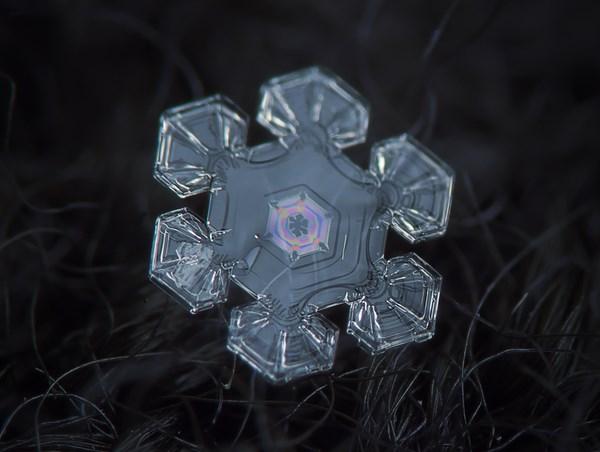 fotografias macro de copos de nieve